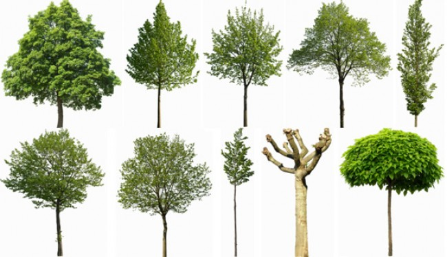 FREE CUT OUT TREE COLLECTION LINKS FOR 3D POST PRODUCTION - PIXELNIL